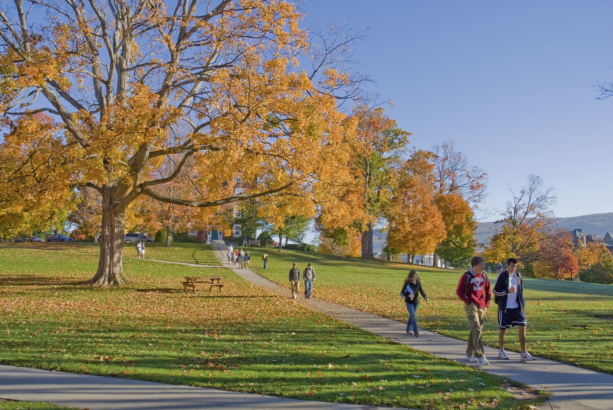 Williams' famous science quad sugar maple, left, as seen in 2007. Photo by Nicholas Whitman, Instructor
